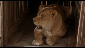 Secondhand lions - lion