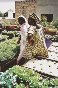 Rooftop garden, Senegal, CC-by-2.0