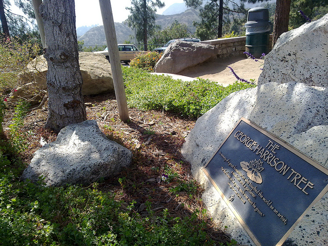 George Harrison memorial tree, 2010 by Al Pavongkanan. Creative Commons